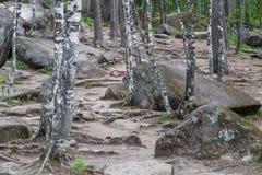 Parque Stolby da paisagem, perto de Krasnoyarsk Fotos de Stock