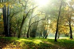 Parque temprano del otoño fotografía de archivo