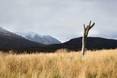 Parque Tierra del Fuego Fotografia Stock