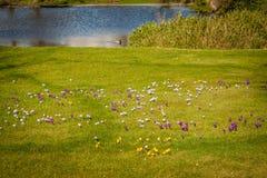 Parque tranquilo con una charca y los wildflowers Foto de archivo libre de regalías
