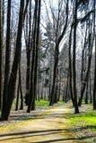 Parque - trayectoria entre árboles en el día soleado Imagenes de archivo