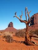 Parque tribal do Navajo do vale do monumento Foto de Stock Royalty Free