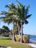 Parque tropical Imagen de archivo libre de regalías