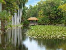 Parque tropical Foto de archivo libre de regalías