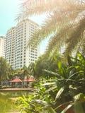 Parque tropical asiático com uma vista das construções altas novas Foto de Stock Royalty Free
