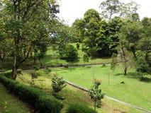 Parque tropical com árvores e grama verdes Imagens de Stock Royalty Free