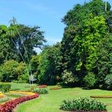 parque tropical com camas, gramados e árvores de flor imagem de stock royalty free