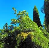 Parque tropical en el arboreto, ciudad de Sochi, Foto de archivo libre de regalías