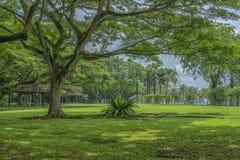 Parque tropical muy verde imágenes de archivo libres de regalías