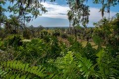 Parque tropical, panorama Parque tropical, panorama Cielo azul, nubes Resto, reflexión, meditación foto de archivo