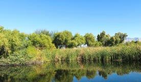 Parque Tucson o Arizona dos pantanais de Sweetwater Fotografia de Stock