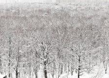 Parque urbano bloqueado pela neve no inverno Foto de Stock