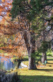Parque urbano no outono, Canadá Foto de Stock