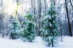 Parque urbano snow-covered silencioso no inverno Imagens de Stock