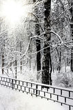 Parque urbano snow-covered silencioso no inverno. Fotografia de Stock
