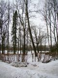 Parque velho no inverno Fotografia de Stock