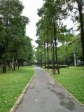 Parque verde Árvores verdes Fotos de Stock