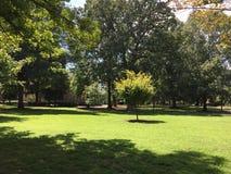 Parque verde Foto de archivo