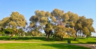 Parque verde fotografía de archivo libre de regalías