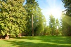 Parque verde Fotos de Stock Royalty Free