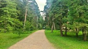 Parque verde Imagenes de archivo