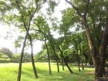 Parque verde Fotografia de Stock Royalty Free