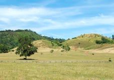 Parque verde com vário tipo de árvores grandes e de gramas de duas cores em The Field das montanhas com o céu azul em Sunny Day d Fotos de Stock Royalty Free