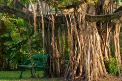 Parque verde da cadeira em público sob a árvore imagem de stock royalty free