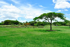 Parque verde da cidade Imagens de Stock