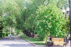 Parque verde da cidade no dia de verão ensolarado Imagem de Stock Royalty Free