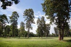 Parque verde da paisagem Foto de Stock