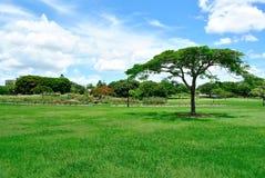 Parque verde de la ciudad Imagenes de archivo