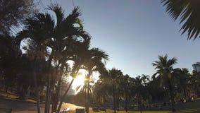 Parque verde de la ciudad Cielo azul a través de hojas de palma Palmeras, gente que se sienta en hierba Cámara de la acción almacen de metraje de vídeo