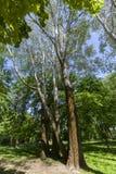 Parque verde de la primavera Foto de archivo
