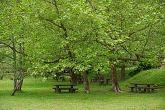 Parque verde de sao Miguel, las islas de Azores, Portugal de los furnas Fotografía de archivo