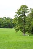 Parque verde del claro en verano Fotografía de archivo libre de regalías