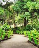 Parque verde na cidade Fotos de Stock