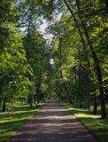 Parque verde selvagem Imagens de Stock Royalty Free