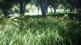 Parque verde, Sun Forest Tree Landscape representación 3d fotografía de archivo libre de regalías