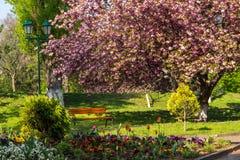 Parque viejo de la ciudad con la linterna Fotografía de archivo libre de regalías