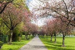 Parque y primavera hermosos Imagen de archivo libre de regalías