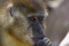 Parque zoológico 2 Foto de archivo