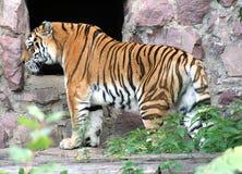 Parque zoológico 32 de Moscú Imágenes de archivo libres de regalías