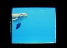 Parque zoológico Imagen de archivo
