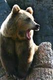 Parque zoológico Fotografía de archivo libre de regalías