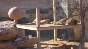 Parque zoológico Albuquerque New México almacen de metraje de vídeo