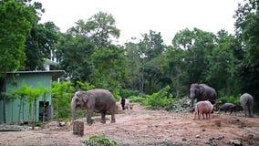Parque zoológico Chonburi de Khao Kheow de los elefantes de Tailandia metrajes
