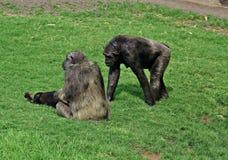 Parque zoológico de Bioparc Fotografía de archivo