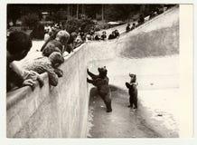 PARQUE ZOOLÓGICO de la visita de la gente de las demostraciones de la foto del vintage Soporte de dos osos en fosa del oso Fotos de archivo