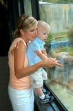 Parque zoológico de las visitas del muchacho y de la mama Fotos de archivo libres de regalías